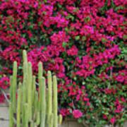 Palm Desert Blooms Poster