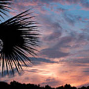 Palm Frond At Dusk Poster