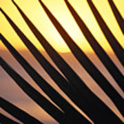 Palm Frond Detail Poster
