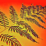 Palm Frond In The Summer Heat Poster