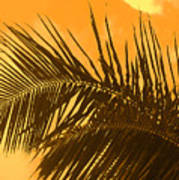Palm Frond Sunset Poster