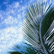Palm Fronds And Clouds Poster