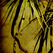 Palm Fronds Are Green Poster