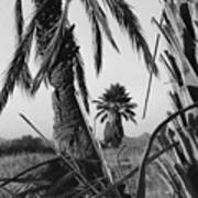 Palm In View Bw Horizontal Poster