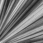 Palm Leaf Texture Poster