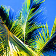 Palm Leaves Against The Sky 3 Ae  Poster