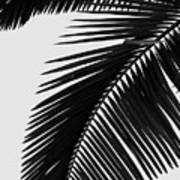 Palm Leaves Bw Poster