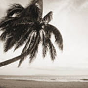 Palm Over Beach Poster