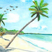 Palm Over Diani Beach Poster