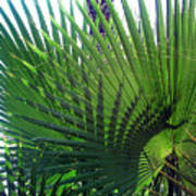 Palm Tree, Big Leafs Poster