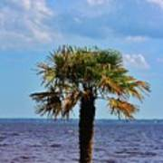 Palm Tree By The Lake Poster