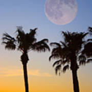 Palm Tree Full Moon Sunset Poster