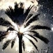 Palm Tree In The Sun #3 Poster