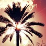 Palm Tree In The Sun Poster