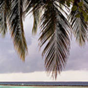 Palm Tree Leaves At The Beach Poster