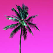 Palm Tree Puerto Rico Poster