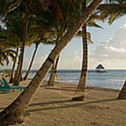 Palm Trees And Hammock On San Pedro Poster