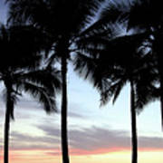 Palm Trees At Sunset Poster