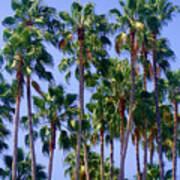 Palm Trees. California, Sunny Beauty Poster