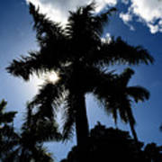 Palm Trees In Silhouette Poster