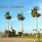 Palm Trees Of Daytona Florida Poster