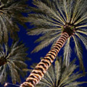 Palm Trees Wrapped In Lights Poster
