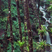 Palm Trunks And Waterfall El Yunque Poster
