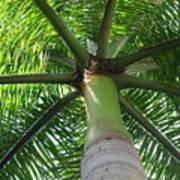 Palm Unbrella Poster