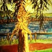 Palmetto Tree Poster