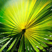 Radial Palm Poster
