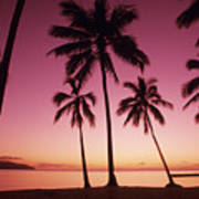 Palms Against Pink Sunset Poster