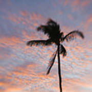 Palms And Pink Clouds Poster