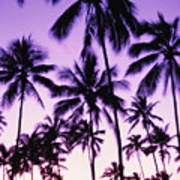 Palms And Purple Sky Poster