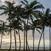 Palms Of Kauai Poster