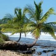 Palms On Ocean Poster