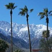 Palms With Snow Poster