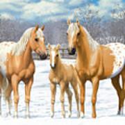 Palomino Appaloosa Horses In Winter Poster