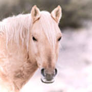 Palomino In The Snow Poster