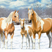 Palomino Paint Horses In Winter Pasture Poster