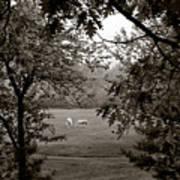 Palominos Framed In Oak Poster