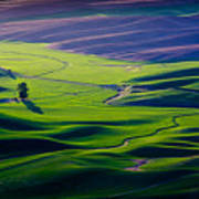 Palouse - Later Afternoon Poster