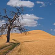 Palouse Wheat Field Poster