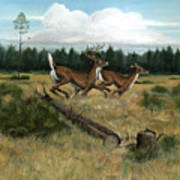 Panhandle Deer Poster