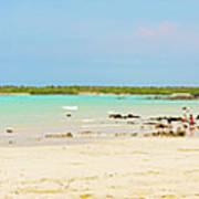 Panorama Of The El Garrapatero Beach On Santa Cruz Island In Gal Poster