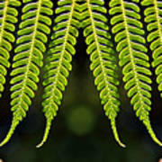 Panoramic Veil Of Ferns Poster