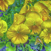Pansies - Coloring Book Effect Poster