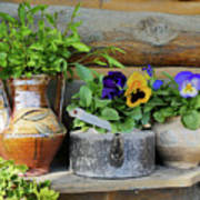 Pansies In Pots Poster