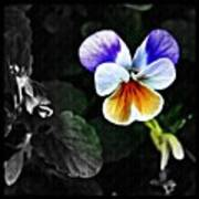 Pansy Statement Poster