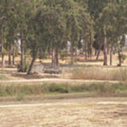 Park Near The Source Of The Yarkon River Poster