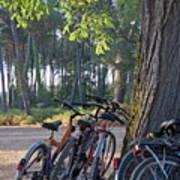 Parked Mountain Bikes Leaning Against A Tree Trunk Poster